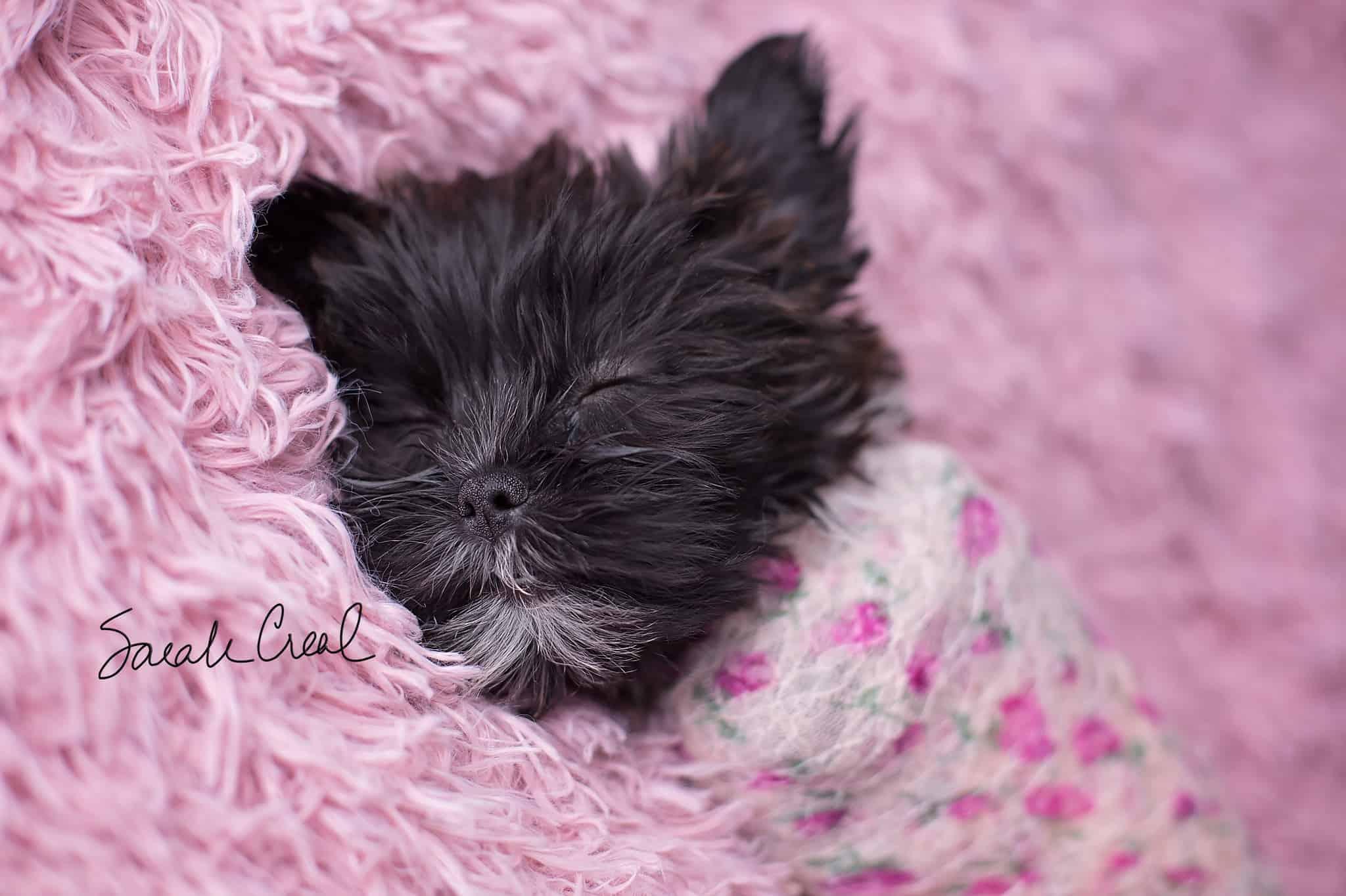 Southwest Lawton Oklahoma newborn puppy photographer
